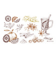 mulled wine spices hand drawn realistic vector image