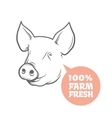 Pig logo design template vector image