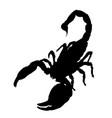 scorpion silhouette vector image vector image