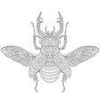 stag beetle adult coloring page vector image vector image