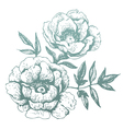 flowers hand-drawn vector image vector image