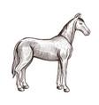 horse handdrawn artwork animal sketch vector image