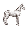 horse handdrawn artwork horse animal sketch vector image vector image