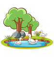 isolated picture ducks in pond vector image vector image