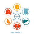 name of bodies and organs vector image vector image