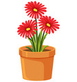 pot red flowers on white background vector image vector image