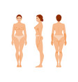 woman anatomy vector image