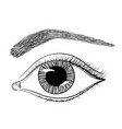 eye with brow hand drawn sketch vector image