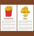 french fries snack and chips vector image