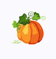 orange pumpkin with leaves and stems isolated vector image vector image