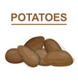potato isolated on white background vector image vector image