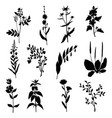 silhouettes of wild plants vector image vector image