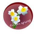 spring flower narcissus vector image vector image