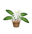 Beautiful White Cape Jasmine A Terracotta Pot vector image vector image