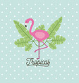 flamingo bird tropical with leaves on decorative vector image
