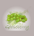 gooseberry watercolor food vector image