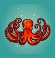 Octopus engraving vintage color engraving color
