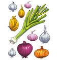 Onion Collection vector image vector image