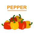 pepper isolated on white background vector image vector image