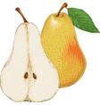 ripe yellow pear whole and in cross section vector image