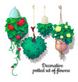set potted flowers growing down vector image