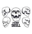 engraving style skulls set vector image vector image