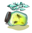 glass jar with flies lying in the sand fragments vector image vector image
