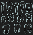 Human teeth vector image