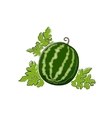 Watermelon Isolated on White vector image vector image