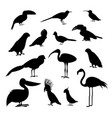 cartoon silhouette black exotic bird icon set vector image vector image