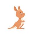 cute baby kangaroo brown wallaby australian