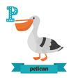 Pelican P letter Cute children animal alphabet in
