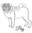 pug dog outline vector image vector image
