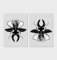 stag beetle insect with poppy flower flora and vector image vector image