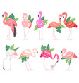 flamingo tropical pink flamingos and exotic vector image vector image