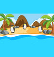 scene with penguins on beach vector image