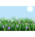 Scilla Flowers vector image vector image