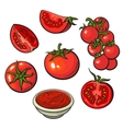 Sketch style set of ripe red vector image vector image