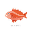 bright red sea bass side view small marine fish vector image