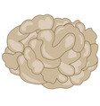 drawing of the brain of the person vector image vector image