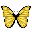 golden butterfly shining vector image