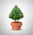 Pots pine tree vector image