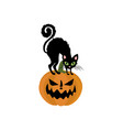 jack-o-lantern pumpkin and cat vector image vector image