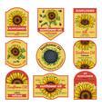 labels for sunflower oil vector image