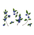 natural forest blueberry branches elements set vector image