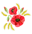 red poppies and ears of wheat vector image vector image
