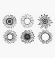 sketch sunflower set vector image