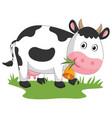 of cartoon cow vector image