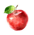 watercolor apple on white background vector image vector image