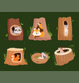 animals hollow wood forest trees with holes for vector image vector image